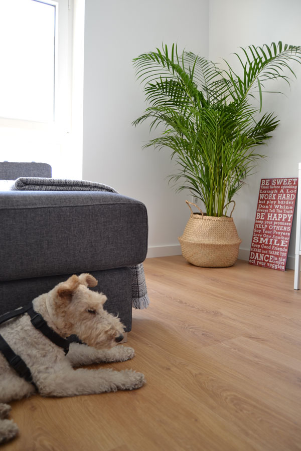 fox_terrier_blanca_casamya_blog_ana_pla_interiorismo_decoracion_4