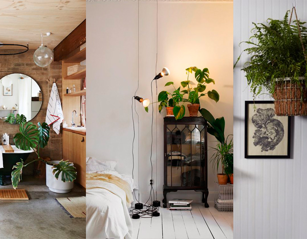 3 plantas de interior que necesitan poca luz decoraci n - Decoracion plantas interior ...