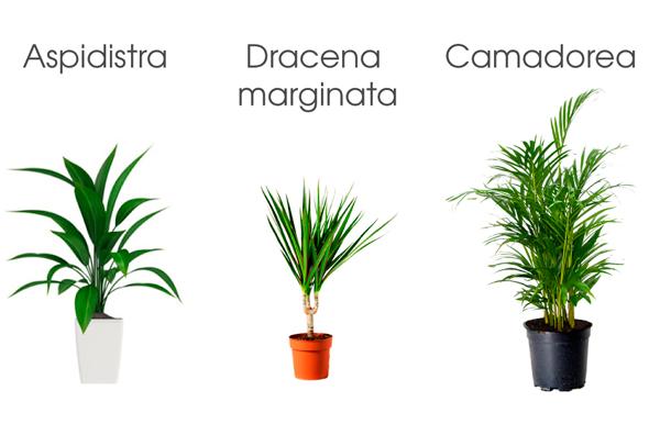 3 plantas de interior que necesitan poca luz ana pla for Plantas de interior muy duraderas