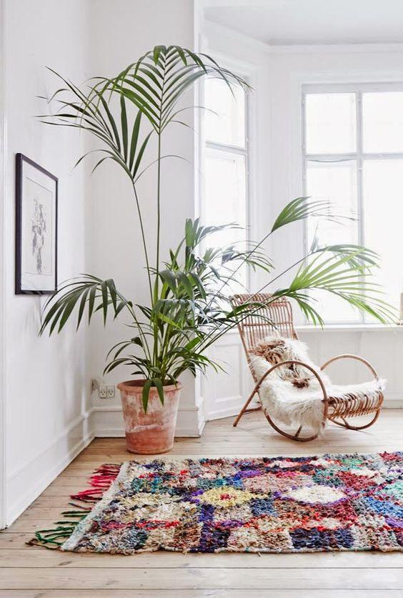 3_plantas_interior_necesitan_poca_luz_blog_ana_pla_interiorismo_decoracion_7