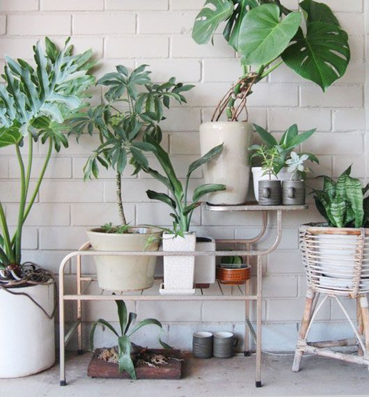 rincon_plantas_decoracion_blog_ana_pla_interiorismo_decoracion_11