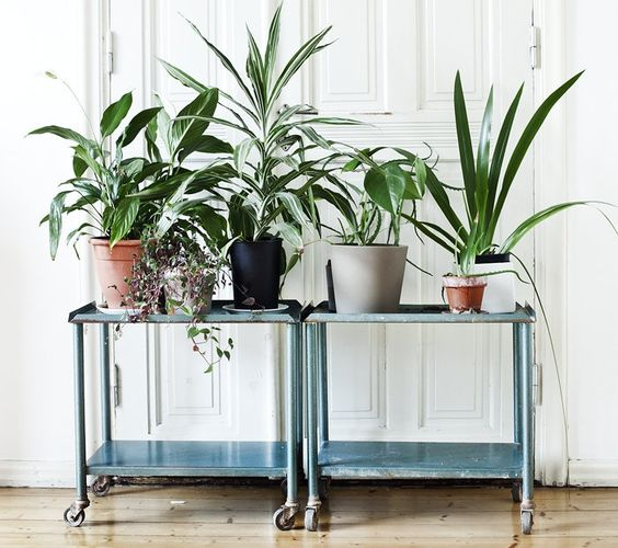 rincon_plantas_decoracion_blog_ana_pla_interiorismo_decoracion_7